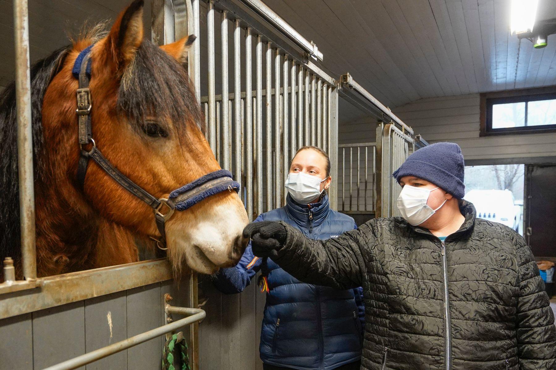Hevonen ja hoitajat tallissa